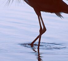 Heron Walking by Roger Otto