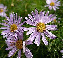 Unkown Flower 7 by beeden