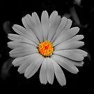 Flower by Sorin  Reck