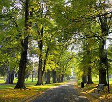 Fitzroy Gardens by Ern Mainka