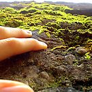 the mossy hand of Trier by Bianca Wolff