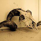 Ram's Skull by gigglemonster