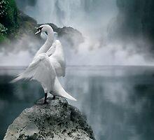 Swan Song by Cliff Vestergaard