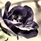 Anemone............. by lynn carter