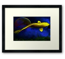 Golden Carp Reflects The Moon Framed Print