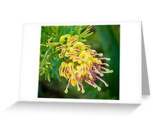 Grevillea alpina x rosmarinifolia Greeting Card