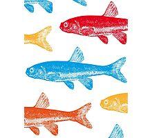 Colourful Fish Photographic Print