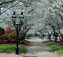 Beautiful Park by Glenn Grossman