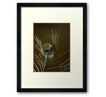 The Peacock Dude! #2 Framed Print