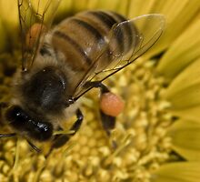 Oh what a buzz by Marty M