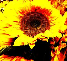 FLAMING~SUN~FLOWER by artist4peace