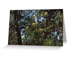 Banksias Greeting Card