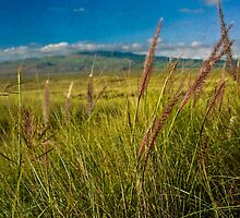 Grasslands of the Big Island in vintage look. by eastvanfran