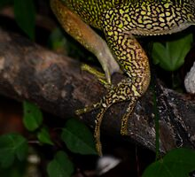 Iguana Claws by Amanda Jordan