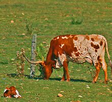 Longhorn Cow and Calf  by tinmar