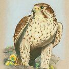 Prairie Falcon by SigneNordin