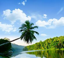 picturesque palm tree leans over the tropical river in the early hours by Sergieiev