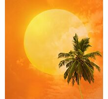 Silhouettes of palm trees on the artistic background Photographic Print