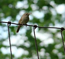 Bird on a wire by Gotcha  Photography