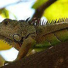 iguana I  by Bernhard Matejka