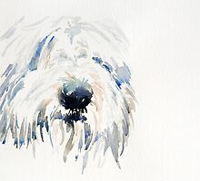 Bearded Collie by Stephie Butler