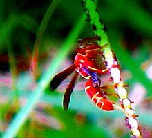 Wasp on grass seedhead by ♥⊱ B. Randi Bailey