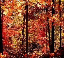 Autumn Splash, Ozark National Forest Near Hawksbill Crag.  by NatureGreeting Cards ©ccwri
