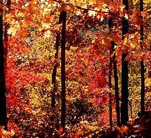 Autumn Splash, Ozark National Forest Near Hawksbill Crag.  by NatureGreeting Cards ©ccwri
