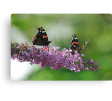 Red Admiral Pair On Buddleia Canvas Print