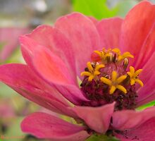 Pretty and Pink by Mary Campbell