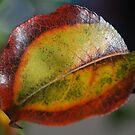 Leaf by Catherine Davis