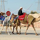 Camel Herder in Dubai by Graham Taylor