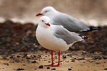 Seagulls by Maureen Clark