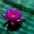 Water Lily by Alison Cornford-Matheson