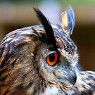Eurasian Eagle Owl (Side elevation) by jdmphotography