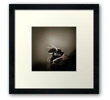 Buzz VI Framed Print