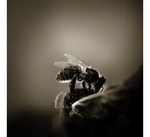 Buzz VI Photographic Print