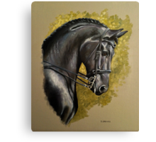 Friesian Study Canvas Print