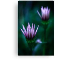 Colour Of Life XVI [Print & iPad Case] Canvas Print
