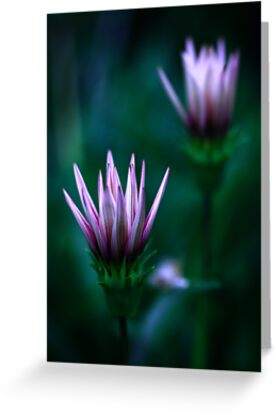 Colour Of Life XVI [Print & iPad Case] by Damienne Bingham