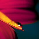 Colour Of Life XXII by Damienne Bingham