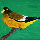 An Evening Grosbeak by Anne Gitto
