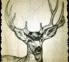 Buck deer drawing by RobCrandall