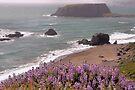 Goat Rock Sonoma Coast by Jo Nijenhuis