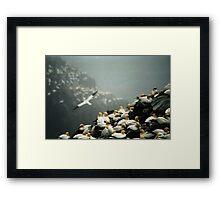 Gannets Framed Print