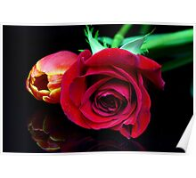 Tulip and a red Rose Poster