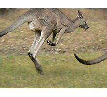 Hopping Kangaroo  Photographic Print