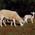 'Lilly and baa baa' by cradlemountain