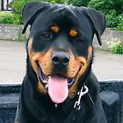 Rottweiler by Linda More