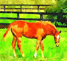 Filly by Bill Wynn